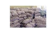 Картофель оптом от производителя от  5р/кг
